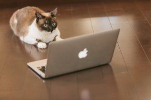 インターネットを使って集客する